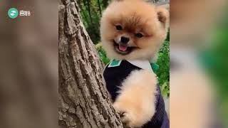 Funny dogs' daily life