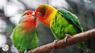 Romantic birds funny things, Birds, Funny Birds || new era beam