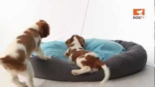 Come play with us! ♥ Cute Dogs ♥