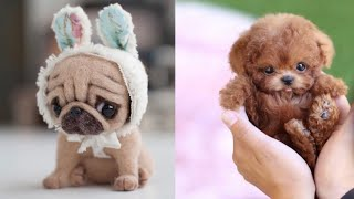 Cute Teacup Puppies Doing Funny Things 2020 || Funny and Cute Dogs Video Compilation