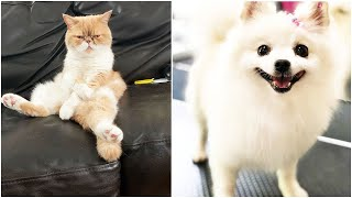 ♥ Cute & Funny Cats and Dogs Compilation #1 ♥ Oh My Pet ♥