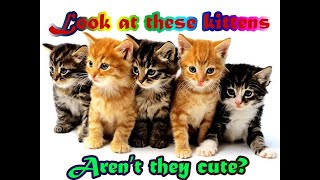 TOP 10 CUTE CATS !!! WATCH TO THE END