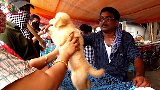 DOG PUPPY PRICE  AT GALIFF STREET PET MARKET WEST BENGAL | 25TH OCTOBER 2020 VISIT WITH SELLER  NO.