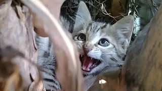 Starving Kittens Were Rescued Who Were Kept Like Prisoners || Ropes Around Their Neck ||
