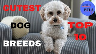 Top 10 Cutest Dog Breeds | Cute Dogs | Daily Pets