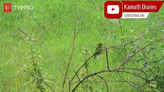 cute birds play time | Bangalore after lockdown 2020