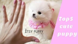 Top5 Cute Puppies | Cute dogs in the world | Cute puppies clips 2020