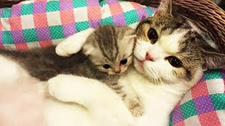 OMG So Cute Cats ♥ Best Funny Cat Videos 2020 #1