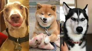 funny and cute Dogs Compilation 2020  😂😍 TRY not to Laugh