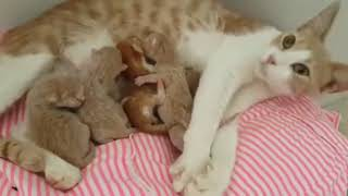 Newborn Baby Kittens Fighting For Milk | Cute Cats