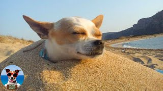 Funny Dogs Go To The Beach | TRY NOT TO LAUGH PET DOGS | PET COMPILATION 2020🐶Dogs Story
