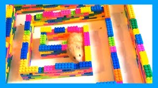 Funny Hamsters – Mini Lego Maze for Hamster