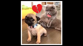 Funniest Animals – Cute Dogs and Cats ~~ Try Not To Laugh