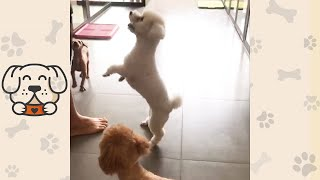 Relax Time To Play With Funny Dogs #shorts