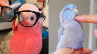 Funny Parrots and Cute Birds Compilation (2020)   Funny Birds And Cute Porrots