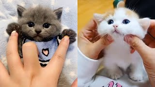 Baby Cats – Cute and Funny Cat Videos Compilation | Cute Kittens In The World