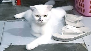 Baby Cats Funny Videos – Cute And Funny Cats 2020 | Cute Cats TV