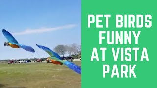 Pet Birds Funny at Vista Park Miami