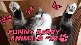 Cute cats, dogs (smart cats) Funny cats 2015 || Funny Berry Animals #32