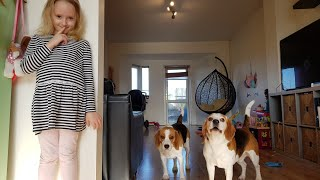 Hide and Seek with Broken Dogs | Cute Dogs Playing with Child