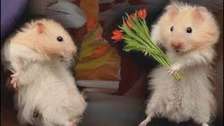 Aww Cute Baby Hamsters 🐹🐹🐹 Videos Compilation   Funny and Cutest moments of Hamsters!!! 😍