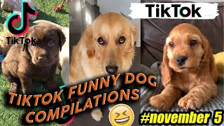 Funny Dogs of TikTok Compilation ~ Try Not To Laugh ~ (5 November 2020)