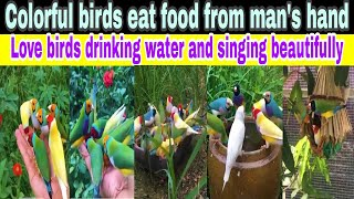 Cutest birds videos compilation | Funny birds eating food | FUN WITH SAAD SHAHBAZ