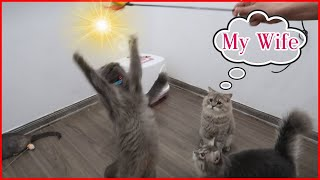 Cute Cats Playing With Toys 2020  – Funniest Cat | JZ Family Vlogs