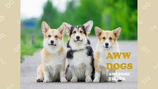 Funny And Cute Dogs Video Compilation 2020 #23