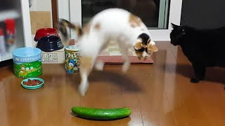 Funny Cats Meowing on YouTube Scared of Random Things fall | Scared Video