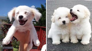 AWW Baby Dogs so cute ! – Cute and Funny Dog Videos Compilation   Cutest Baby Dogs #12