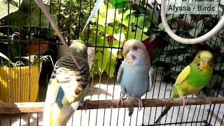Funny Parrot and Cute Birds Compilation