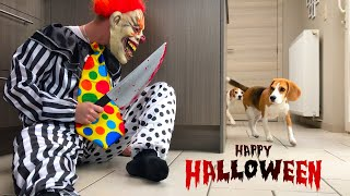 Funny Dogs vs Halloween Costumes PRANK!