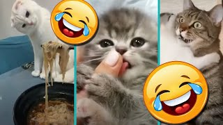Funy and Cute Cats and dogs Best Of November 2020 Compilation of the web