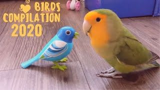 Baby Animals 🔴 Funny Parrots And Cute Birds Compilation 2020 Loros Adorables Recopilación