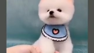 cute dog new whatsapp status||new cute dogs status video||pet lovers whatsapp Status||cute pets
