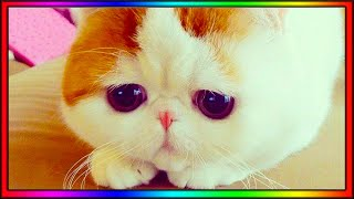 Baby Cats – Cute and Funny Cat Videos Compilation #6 | AWW Animals SOO Cute!
