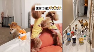 Funny, Smart And Cute Dogs Video!.. Try Not To Laugh #53