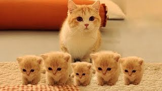 OMG So Cute Cats ♥ Best Funny Cat Videos 2020 #29