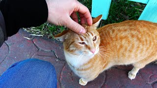 I went to cat island for Valentine's day (Cute Cats)