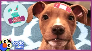 All Better Shiner — Help Tiny Puppy Grow To Be The Happiest Dog   Animal Videos For Kids   Dodo Kids