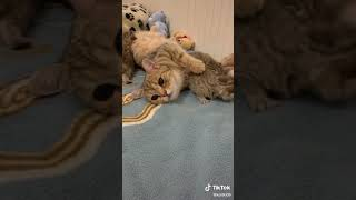 Cats are so funny PART 446 FUNNY CAT VIDEOS TIK TOK
