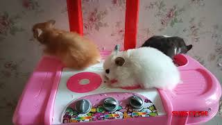 CUTE HAMSTER !!!!!!!!!!! Funny Hamsters Videos Compilation #1