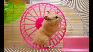 Funny Hamsters #2 – Compilation
