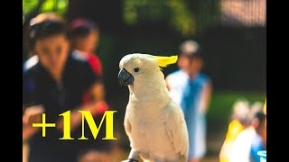 Try Not To Laugh Challenge – Funny bird videos awesome compilation 2020