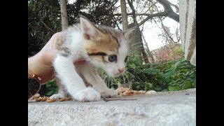 Cute Tiny Baby Kitten Videos.😍 All Very Cute. (Cute cats living on the street)