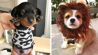 Cute Puppies Doing Funny Things, Cutest Puppies in the Worlds 2020 ♥ #3  Cutest Dogs