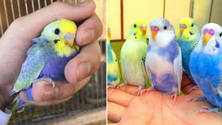 Baby Animals 🔴 Funny Parrots and Cute Birds Compilation (2020) Loros Adorables Recopilación #23