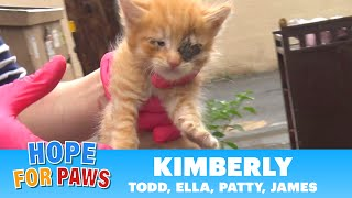 Family of kittens almost thrown into the trash – we got there just in time!