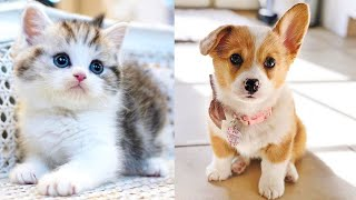 💗😍Baby Dogs – Cute and Funny Dog Videos Compilation 😍💗#38| Pet Shows